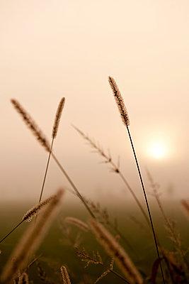 Morning fog - p533m1088382 by Böhm Monika