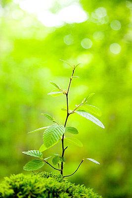 Tree sapling - p5143637f by ZUKAGAWA