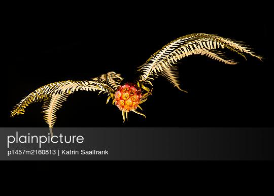 p1457m2160813 by Katrin Saalfrank