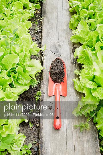 im Salatbeet - p464m1147229 von Elektrons 08