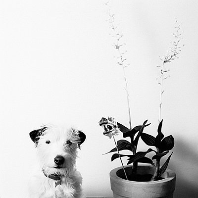 Dog next to a plant - p2685036 by Peter Nitsch
