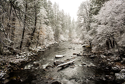 Stream flowing in snowy forest - p555m1306376 by Adam Hester
