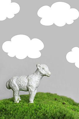 Lamb in the meadow - p450m1052019 by Hanka Steidle