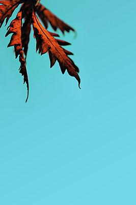 Herbstlaub    - p450m1083424 von Hanka Steidle