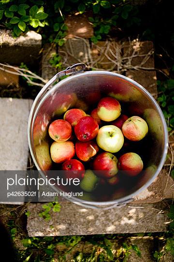 Summer apples in bucket