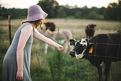 Woman reaching through wire fence to touch cow - p924m1157675 by Lena Mirisola
