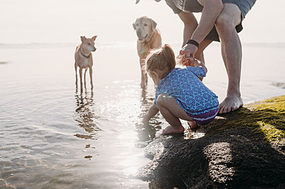 Father and daughter with dogs at rocky beach - p1166m1474557 by Cavan Images