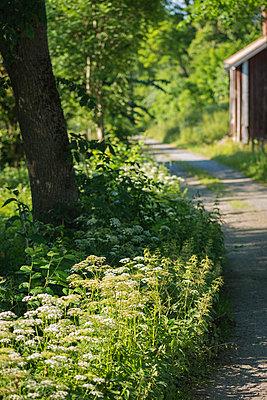 p847m988317 von Jan Håkan Dahlström