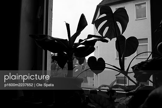 Indoorplants at the window - p1600m2237652 by Ole Spata