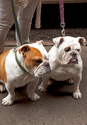 Dogs waiting - p382m763161 by Anna Matzen