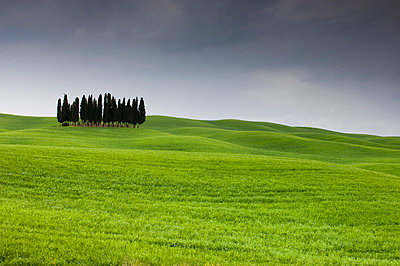 Cypress trees near San Quirico d'Orcia, Val d'Orcia, Siena province, Tuscany, Italy, Europe - p8711771 by Sergio Pitamitz