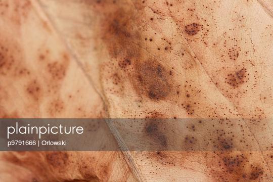 Autumn - p9791666 by Orlowski