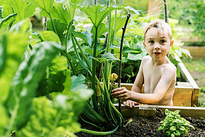 Little boy checking out his growing zucchini - p1166m2201445 by Cavan Images