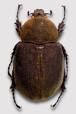 Käfer - p415m808529 von Tanja Luther
