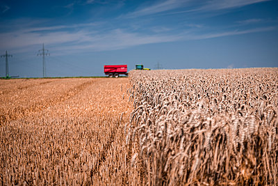 Getreideernte - p743m1190024 von Stefan Freund