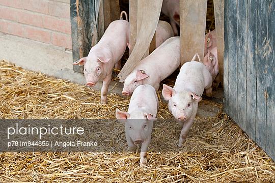 Ausblick - p781m944856 von Angela Franke