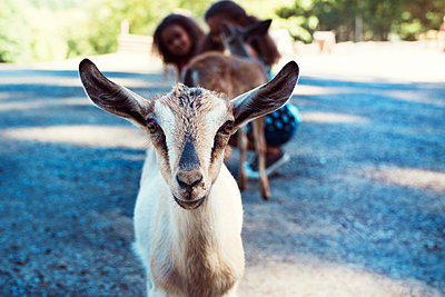 Portrait of kid goat while girls crouching on footpath in background - p1166m1225948 by Cavan Images