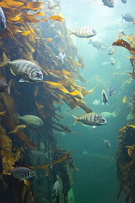 Two Oceans Aquarium, biodiversity - p1640m2246213 by Holly & John