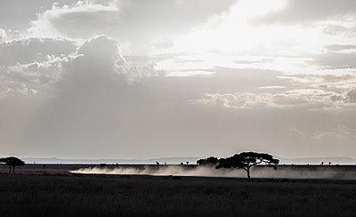 Serengeti safari dusty road - p1691m2288615 by Roberto Berdini Bokeh