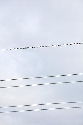 Birds on a wire - p2280473 by photocake.de