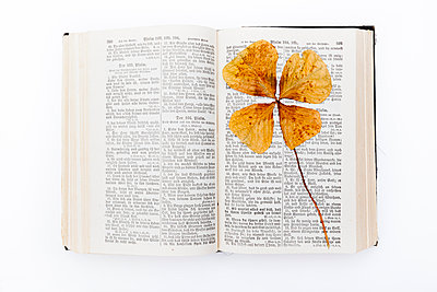 Kleeblatt auf Bibelseite - p248m924796 von BY