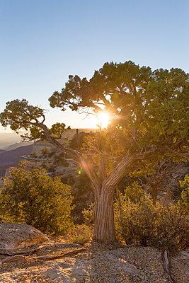Grand Canyon - p756m2082088 von Bénédicte Lassalle