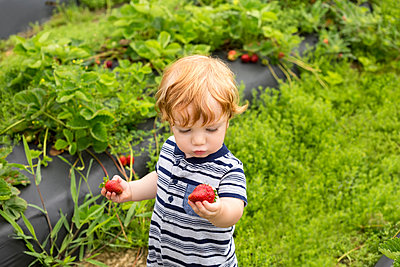 Toddler outdoors, holding strawberries - p1427m2283230 by Roberto Westbrook