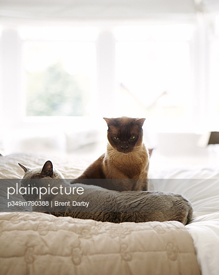 Two cats on quilted double bed of Harrogate home