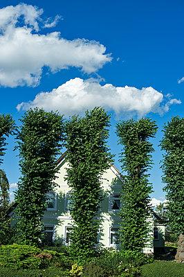 Beschnittene Bäume - p229m1169876 von Martin Langer