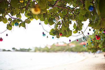 Under a tree in St.Thomas Island, U.S. Virgin Island,  - p579m2015574 by Yabo