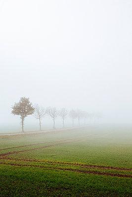 Nebel - p946m938934 von Maren Becker