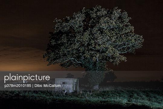 p378m2010185 von Dibs McCallum