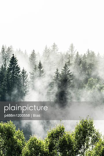 Baumspitzen - p488m1200558 von Bias