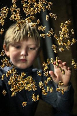Bee Boy - p1019m2047710 by Stephen Carroll