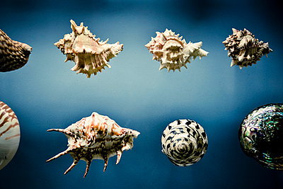 Display Of Different Shells - p1072m1056611 by Neville Mountford-Hoare