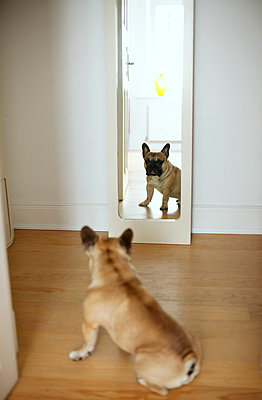 Vain dog - p432m702646 by mia takahara