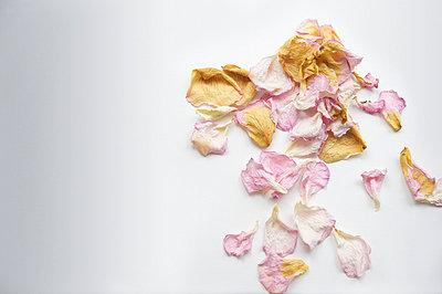 Blütenblätter - p8830006 von Basler/Bouguerra