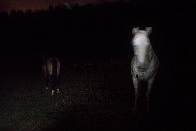 Horses - p1479m2004815 by Helio Léon