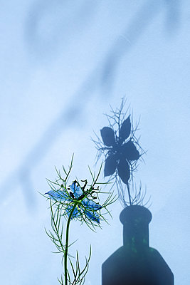 Wild flower in a bottle with shadow - p1228m1584135 by Benjamin Harte