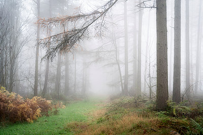 Foggy autumn woods at Wass Bank near Helmsley, The North Yorkshire Moors, Yorkshire, England, United Kingdom - p871m2074855 by John Potter