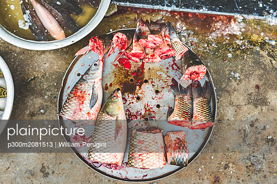 Vietnam, Hanoi, fish on sale at local market in the old town - p300m2081513 by William Perugini