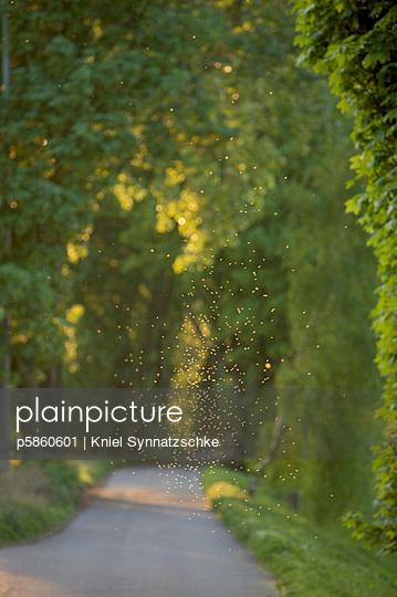 Insektenschwarm - p5860601 von Kniel Synnatzschke