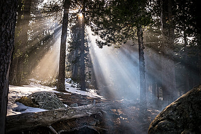 Sunray and smoke in the forest - p1007m1134072 by Tilby Vattard
