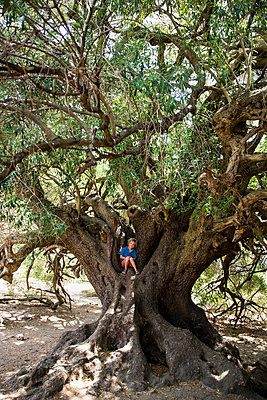 Boy climbing on olive tree - p628m1476237 by Franco Cozzo