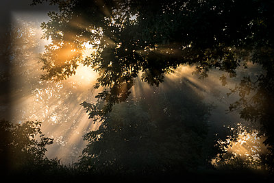 Sonnenstrahlen scheinen durch die Bäume - p739m1170260 von Baertels