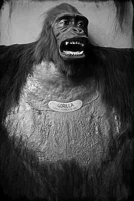 Exponat, Gorilla - p1154m2297764 von Tom Hogan