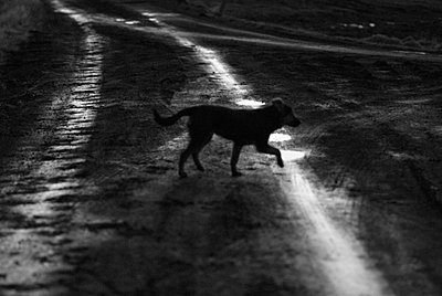 A dog in the countryside ,Iceland - p348m733683 by Martina Sjaunja