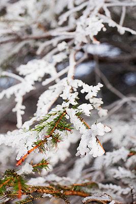 Frozen - p940m792387 by Bénédite Topuz