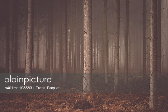 Wald - p401m1198583 von Frank Baquet