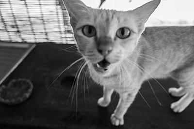 Portrait of domestic cat - p1567m2173042 by Claire Picheyre